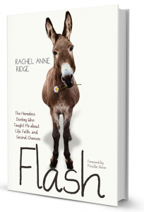 Flash Book Cover