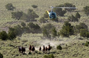 A group of wild horses are rounded up in Eureka, Nevada. (Photo: Justin Sullivan/Getty Images)
