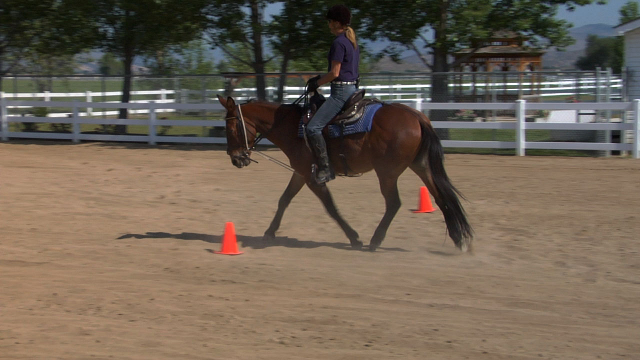 Hourglass Pattern Under Saddle at the Walk & Trot