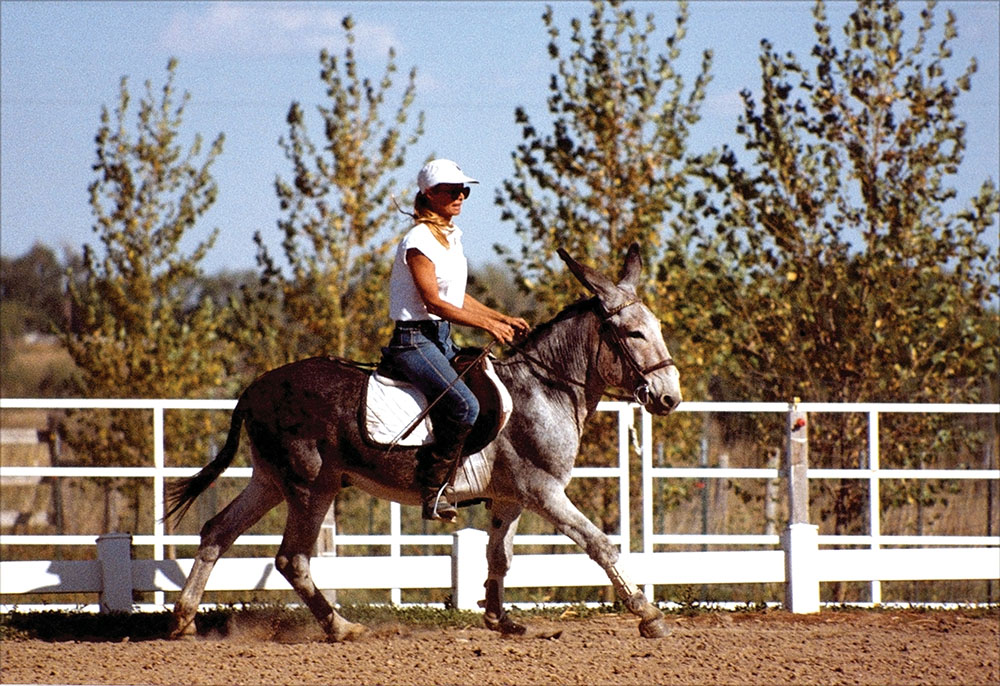 Canter Under Saddle in the Open Arena