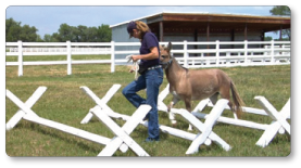 Meredith walking with a mini-mule