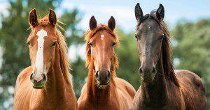 AWHP horses