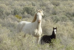AWHPC PHOTOS MARE AND FOAL