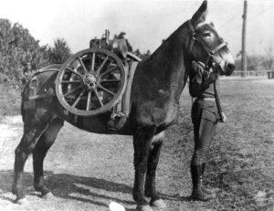 Artillery Pack Mule, 1940_CC