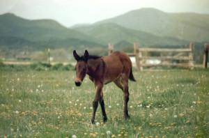 BabyBea1983