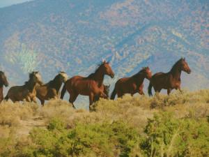 Wild Horses in Desatoya Herd Management Area | BLM