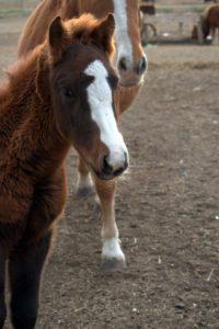 ispbm-foals