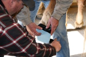 roll-farrier-2-25-16-097_cc