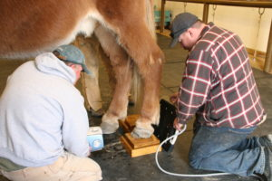 roll-farrier-3-1-16-034_cc