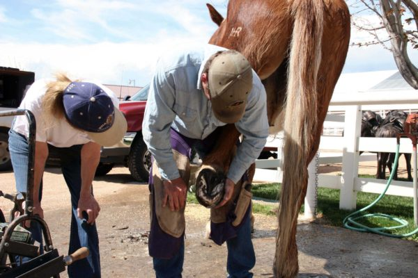 roll-farrier-wash-tail-5-6-16-099_cc
