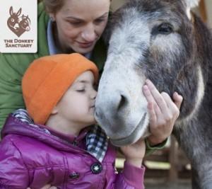 donkeytherapyromania