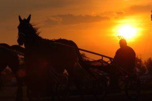 standardbred-at-sunrise